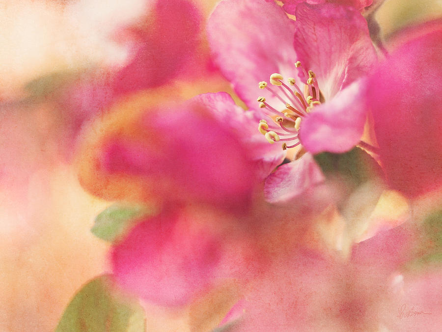 Pink Photograph - Crab Apple Blossoms II by Kharisma Sommers