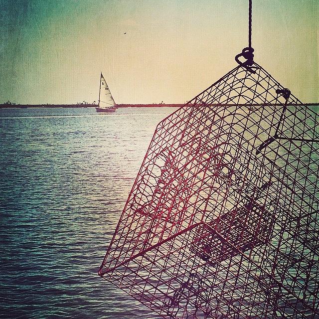 Coastal Photograph - Crab Trap #biloxi #sailboat #crab by Joan McCool