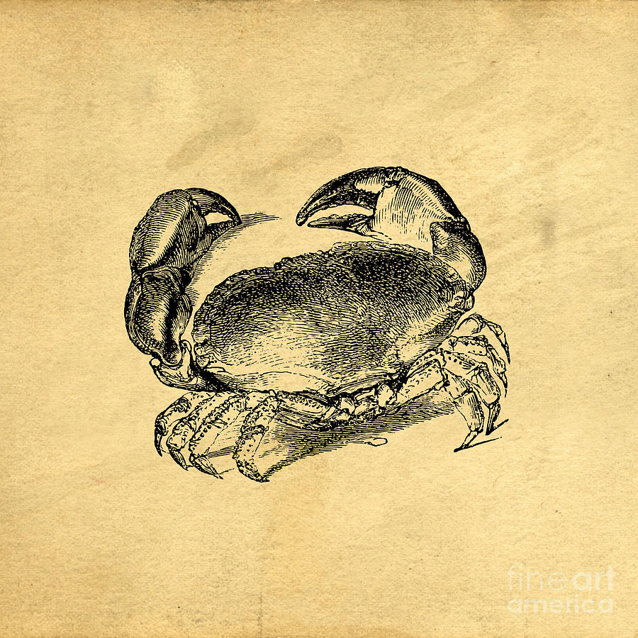 Crab Drawing - Crab Vintage by Edward Fielding