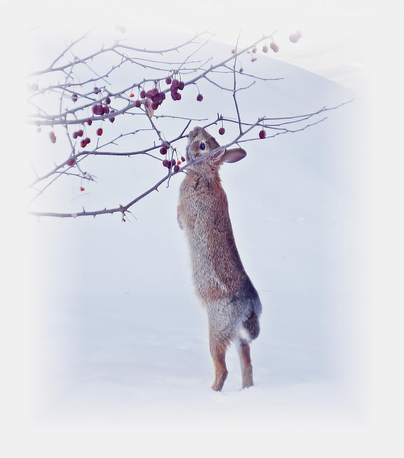Crabapple Snow Bunny Cropped - Rabbit With Vignette by MTBobbins Photography