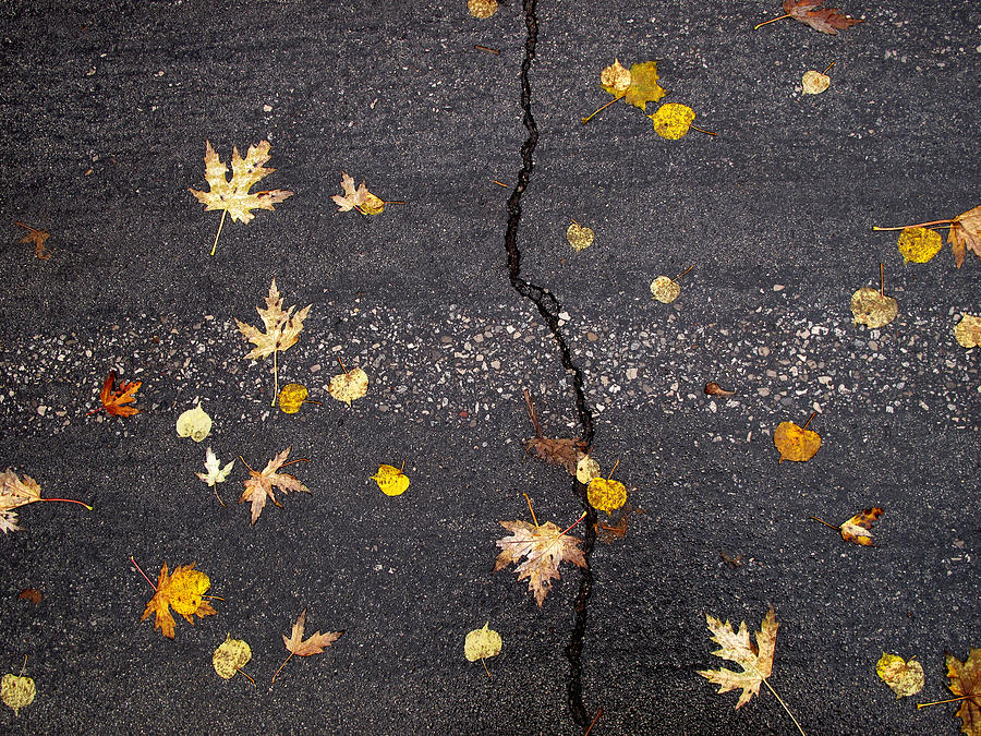Maple Leaves Photograph - Crack 2 by Lyle Crump