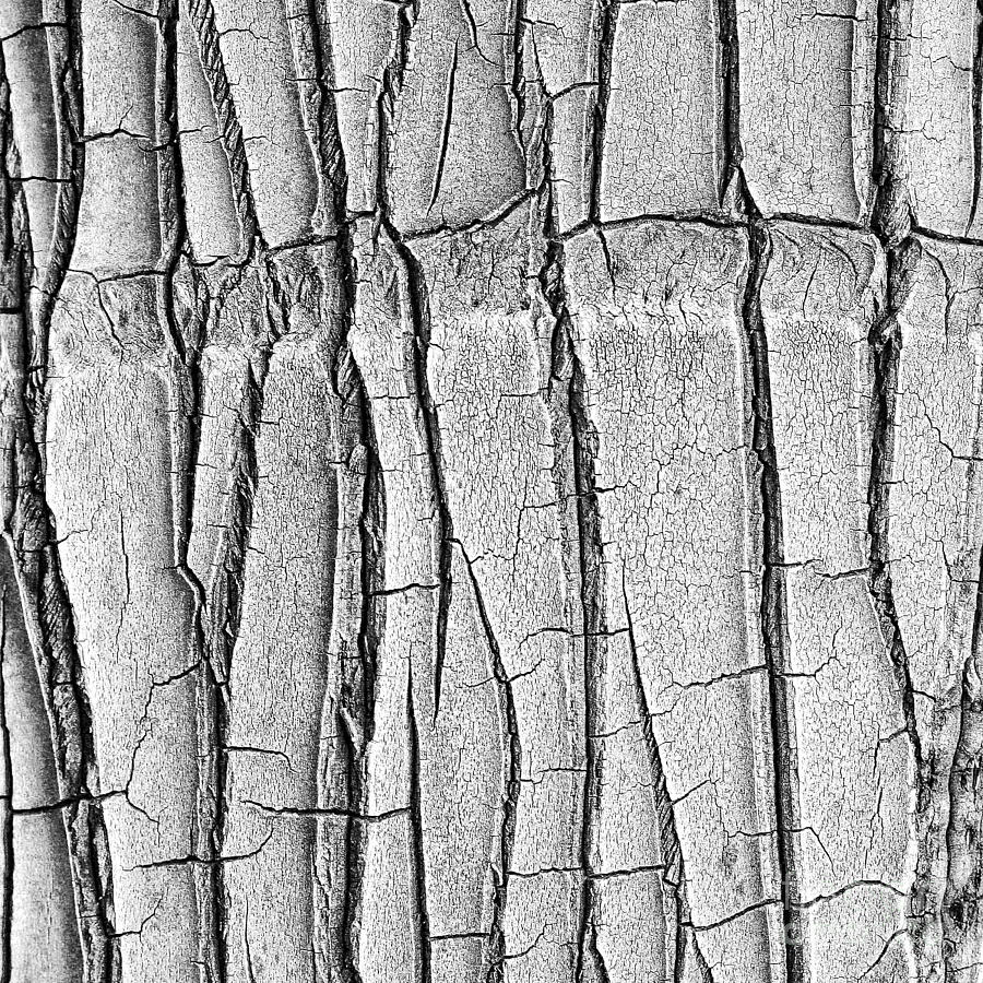 Abstract Photograph - Cracked Trunk by Paul Topp
