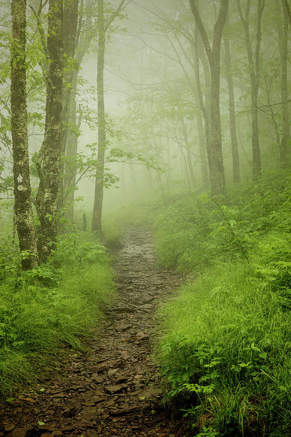 Craggy Gardens Photograph - Pilgrims Pathway - Craggy Gardens Trail by Stephen Stookey