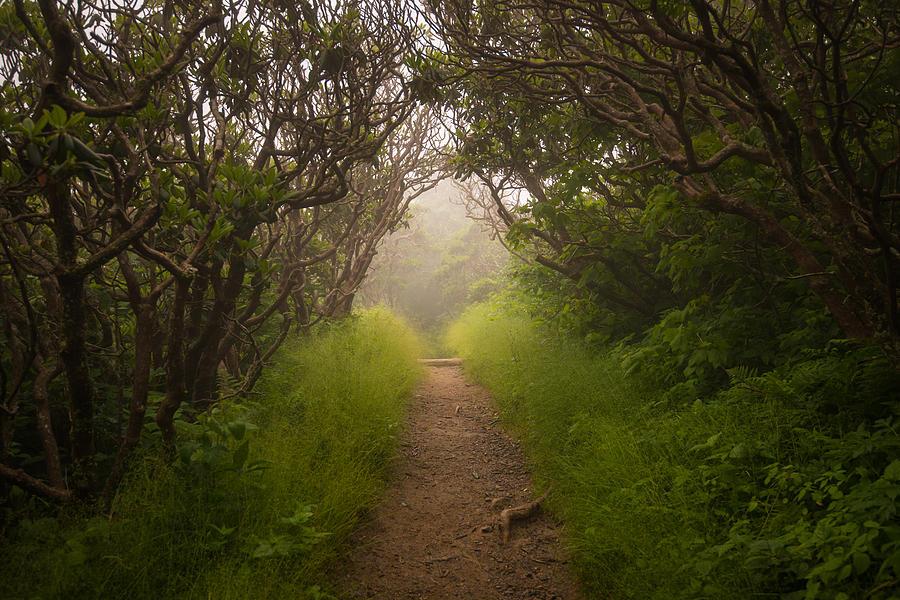 Craggy Pinnacle Trail Blue Ridge Parkway by Rick Dunnuck