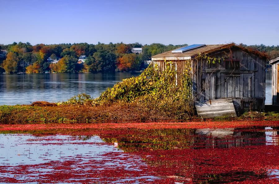 Cape Cod Photograph - Cranberry Bog Farm II by Gina Cormier