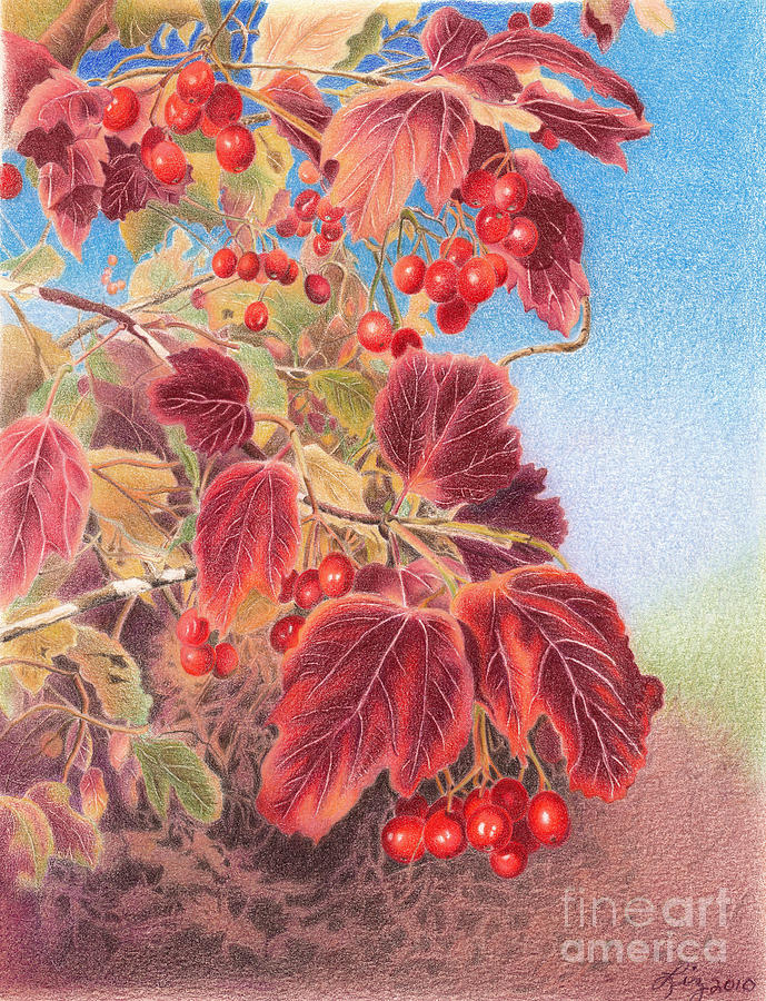Cranberry Bush in Autumn by Elizabeth Dobbs