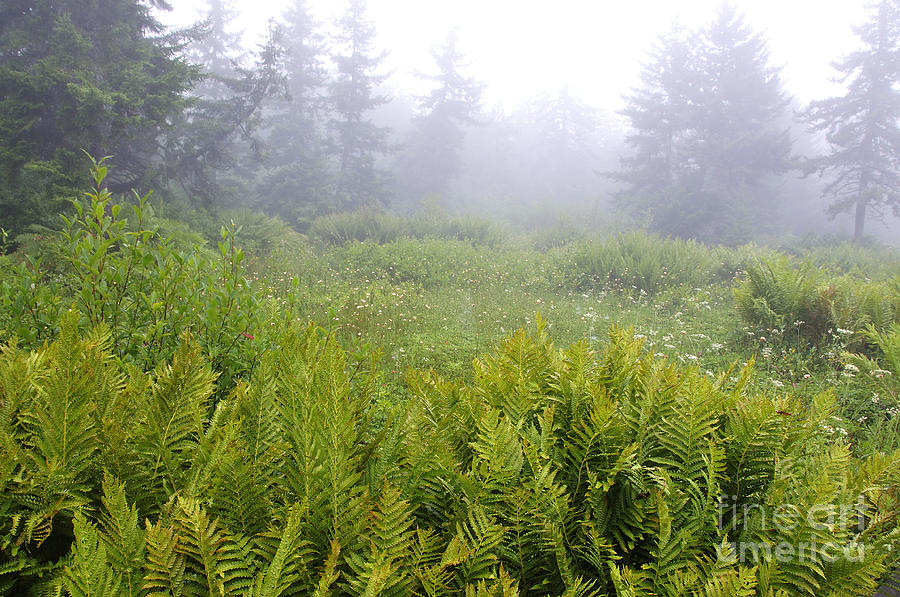 Fog Photograph - Cranberry Glades Early Morning by Thomas R Fletcher