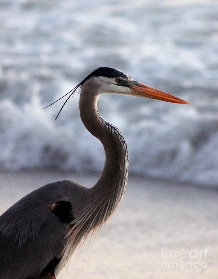 Bird Photograph - Crane By The Sea by Mesa Teresita