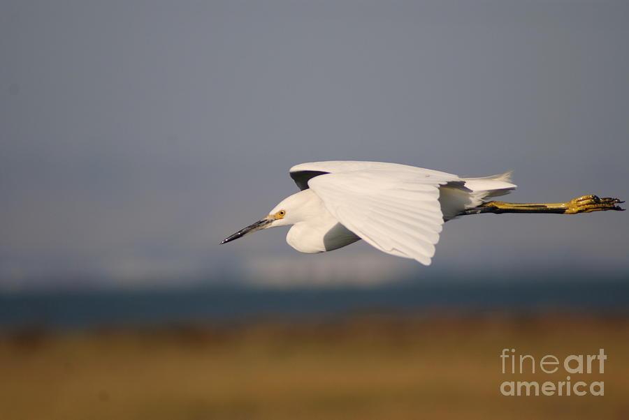Animal Photograph - Crane by Catherine Lau