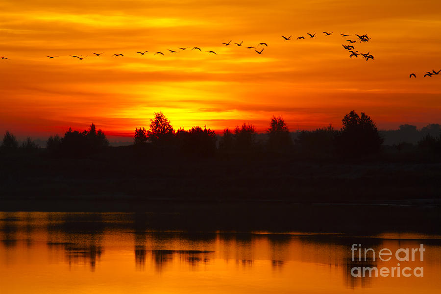 Cranes Photograph - Cranes In The Morn by Steffen Krahl