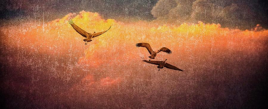 Cranes Lifting Into The Sky by Jeffrey Jensen