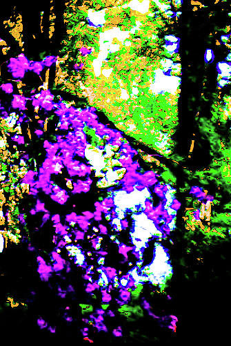 Purple Photograph - Crape Myrtles Abstract by Barbara Searcy