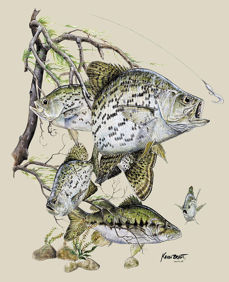 Crappie Painting - Crappie and Bass by Kevin Brant