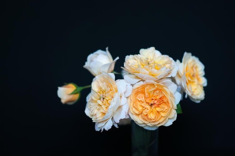 Roses Photograph - Creamy English Roses by Ilze Lucero