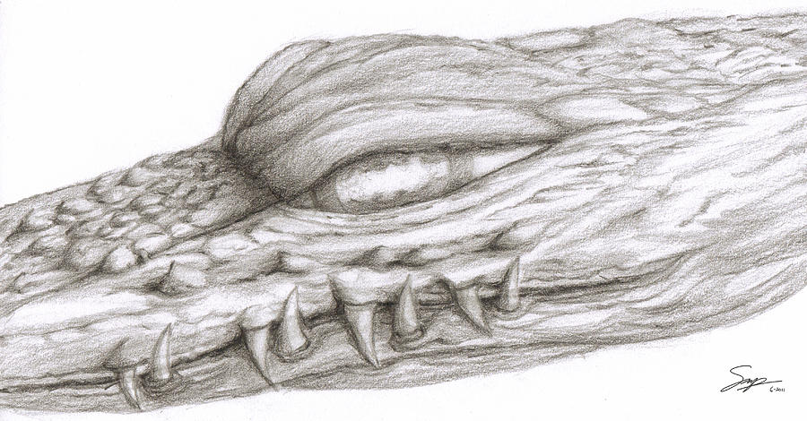 Sketch Drawing - Creature Eyes -1 by Steven Powers SMP