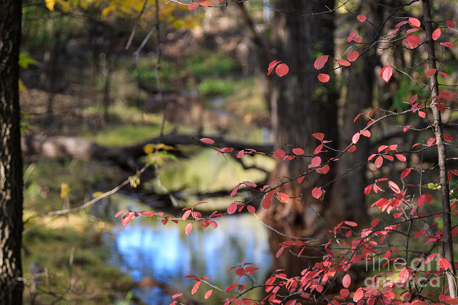 Day Photograph - Creek and Fall Color by Richard Smith