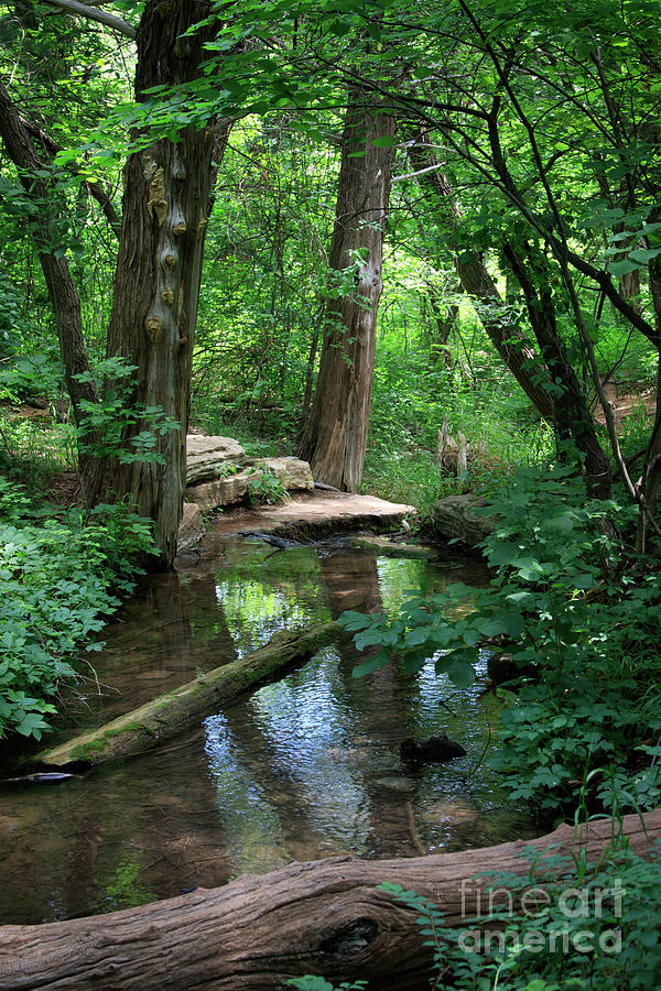 Creek and Wood at Roman Nose State Park #1 by Richard Smith