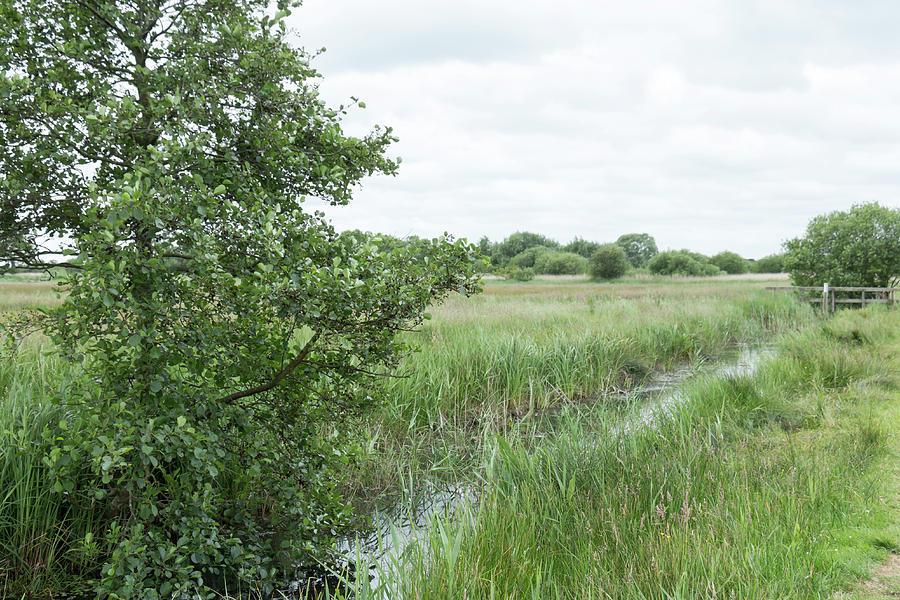 Creek at Strumpshaw Fen by Dawn Cavalieri