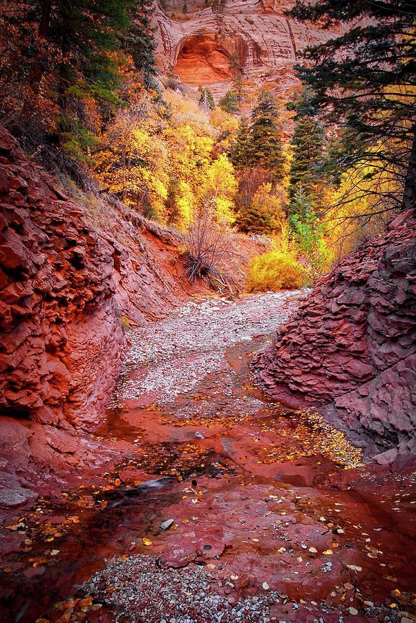 Southwest Photograph - Creek Bed, Taylor Creek, Zion National Park by Zayne Diamond Photographic