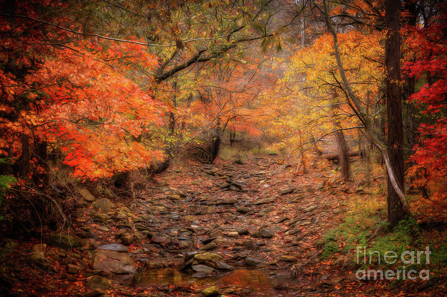 Creek bottom Color by Larry McMahon