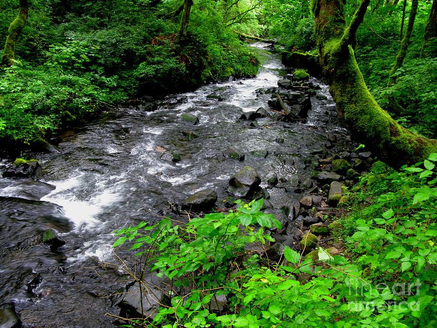 River Photograph - Creek Flow by PJ  Cloud
