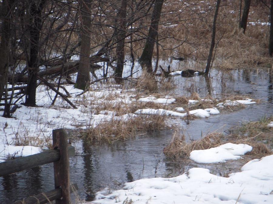 Creek Photograph - Creek in Winter by Deborah Finley