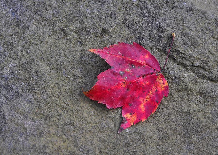 Autumn Photograph - Crimson by JAMART Photography