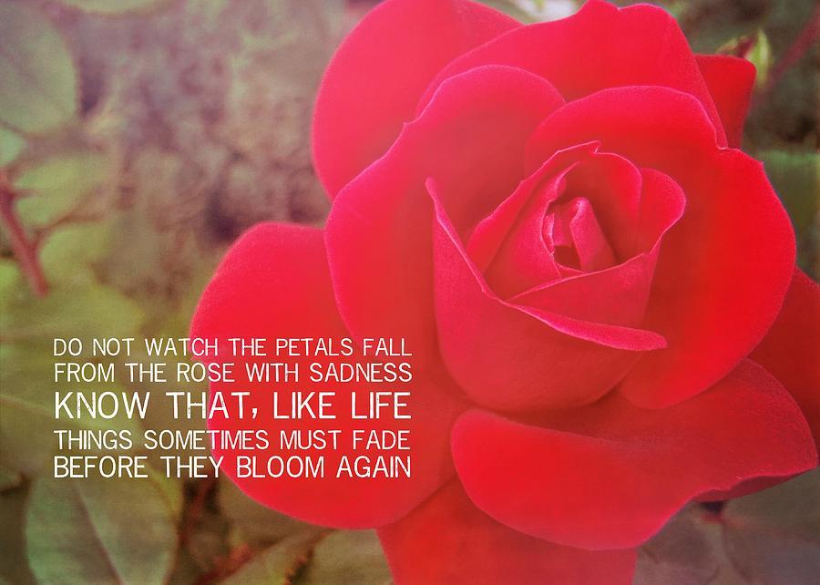 Rose Photograph - Crimson Velvet Quote by JAMART Photography