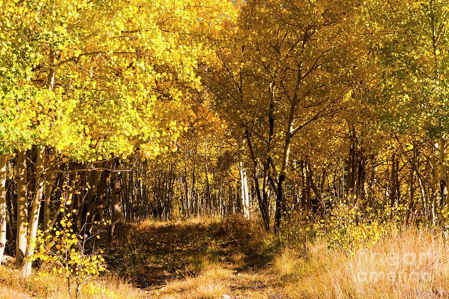 Cripple Creek Autumn Road Photograph