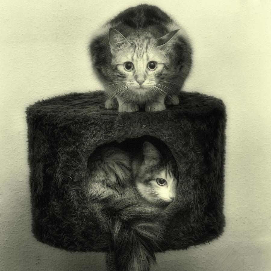 Cat Photograph - Crise Du Logement by Claire Jean