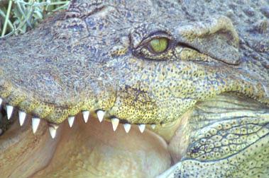 Crocodile Photograph - Croc by Linda Jackson
