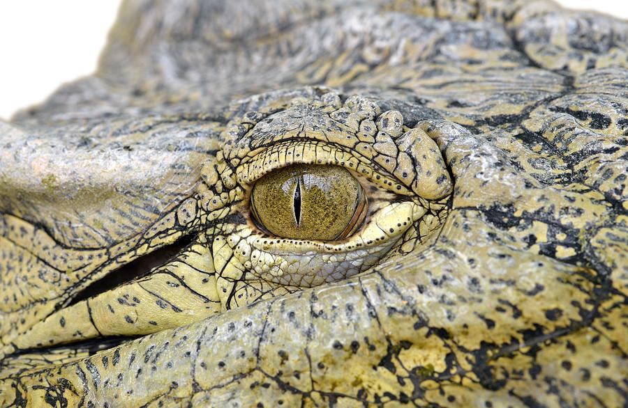Crocodile Photograph - Crocodile Eye by George Atsametakis