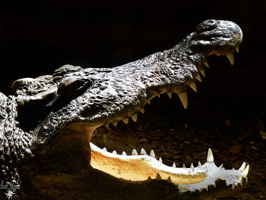 Reptile Photograph - Crocodile by Scott Hovind