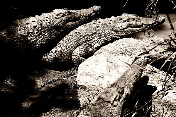 Crocs Den Photograph by Dale Robertson
