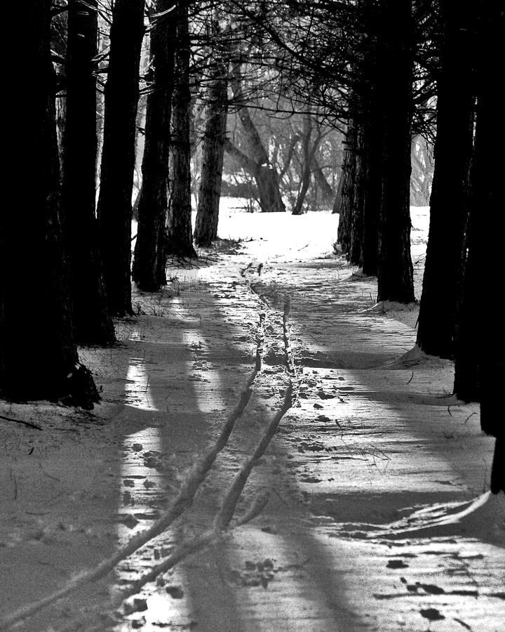 Skiing Photograph - Cross Country Tracks by Ralph Steinhauer