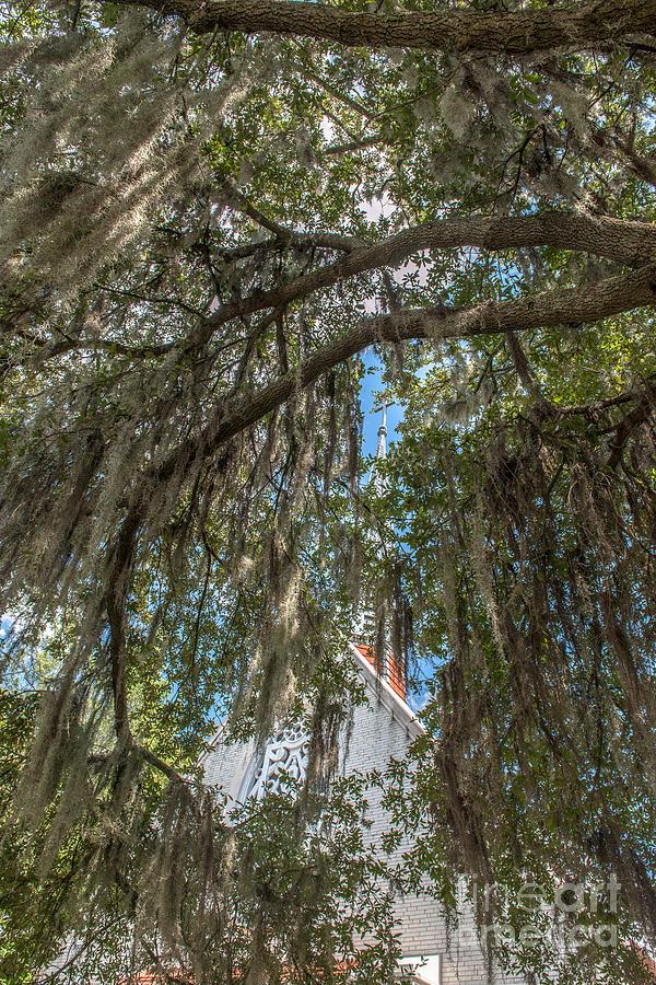 Cross View Through The Spanish Moss Photograph