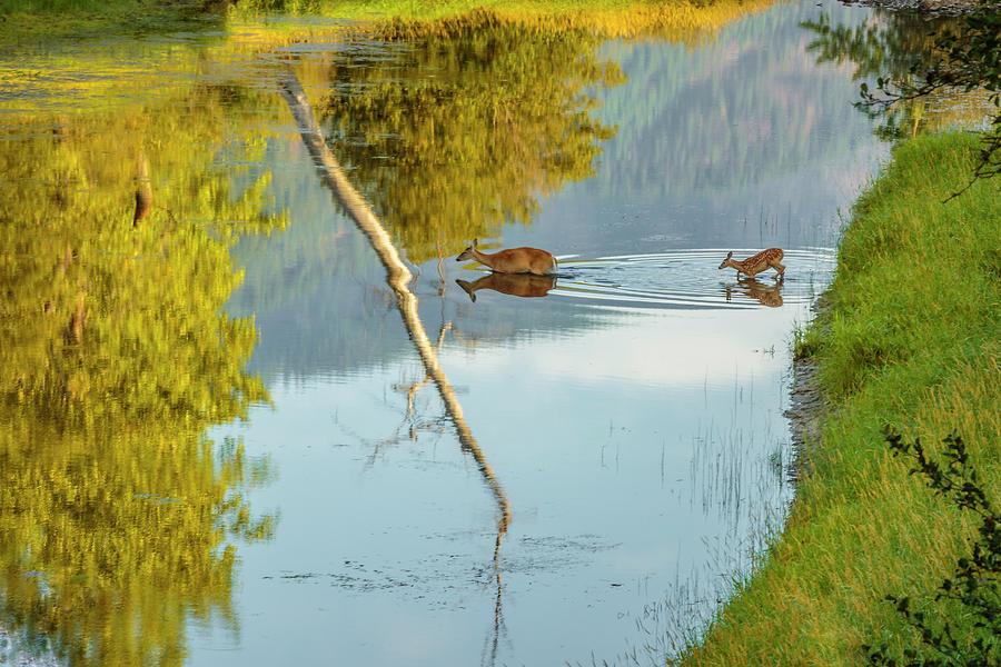 Crossing Myrtle Creek by Albert Seger