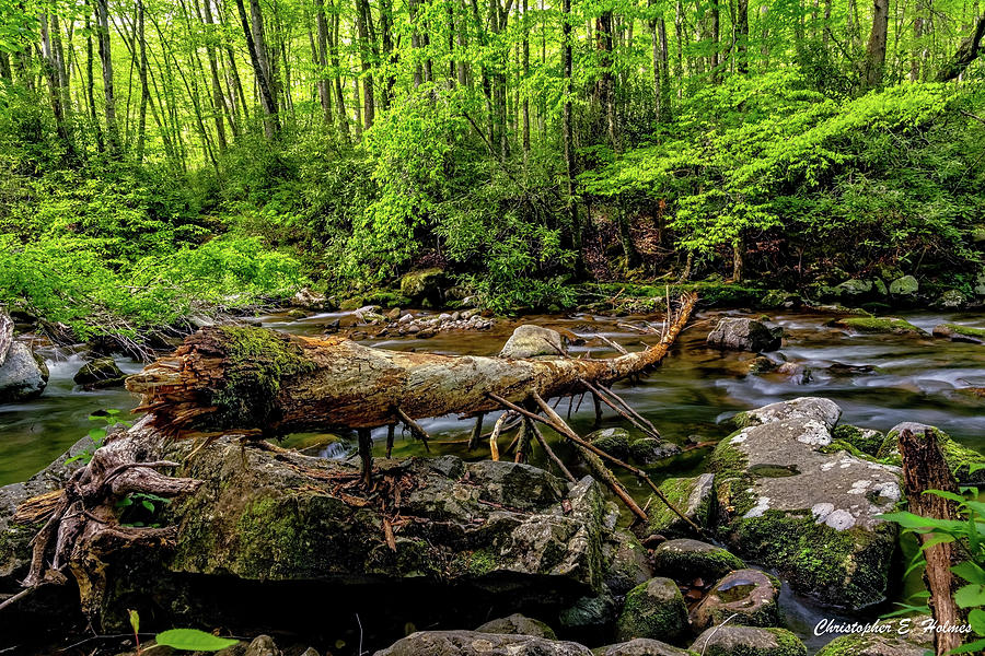 Crossing The Stream by Christopher Holmes