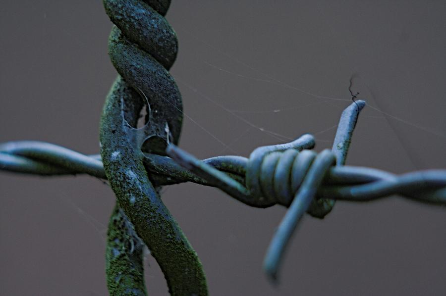 Steel Photograph - Crosswired by Sean Green