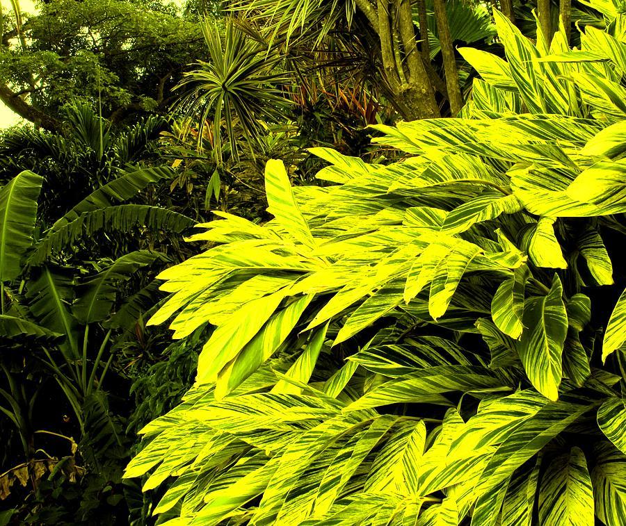 Croton Photograph - Croton Cascading Down The Hillside by Ian  MacDonald