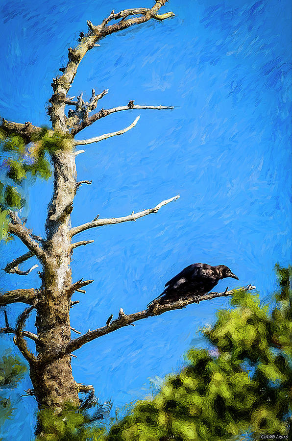 Bird Photograph - Crow In An Old Tree by Ken Morris