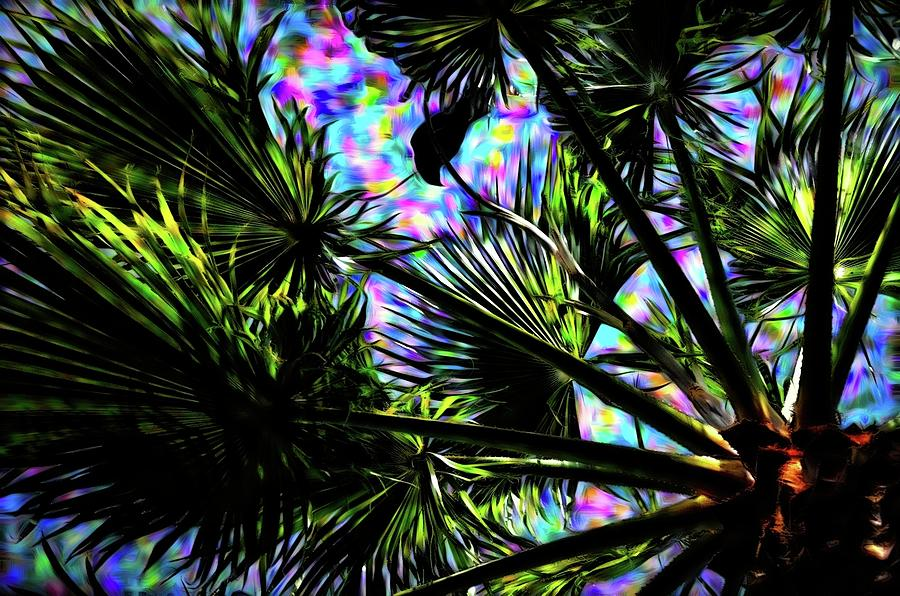 Crow In The Palm Tree 13 Version 2 By Kristalin Davis Photograph
