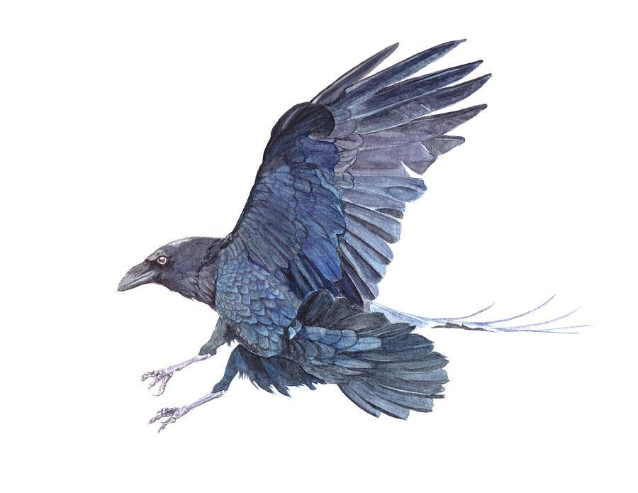 Raven Bird Landing