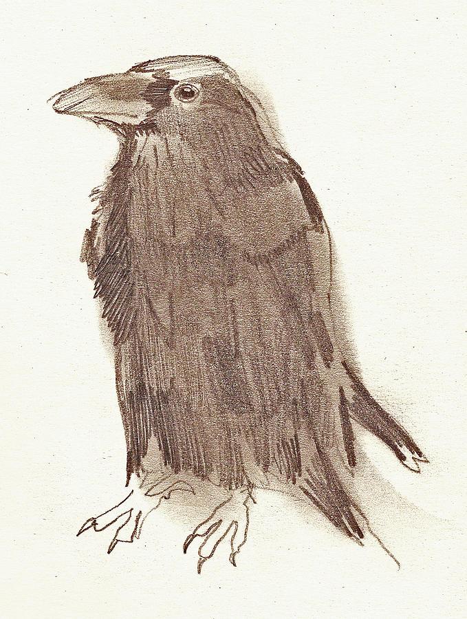 Crow Drawing - Crow by Sarah Lane