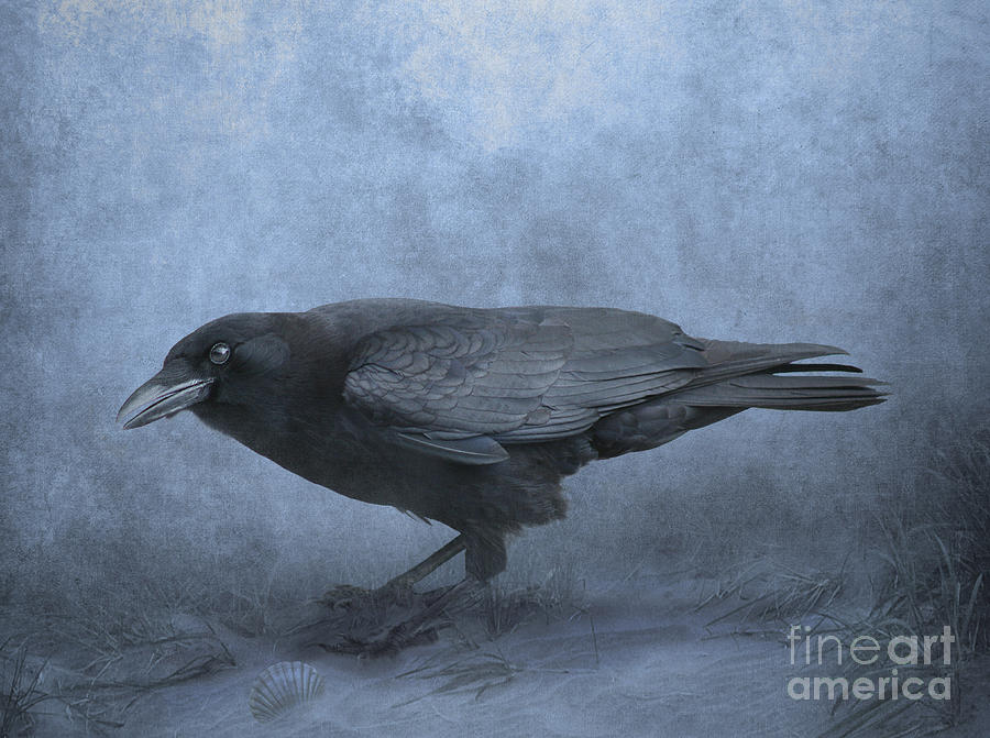 Crow Photograph - Crow Searching For Seashells by Lynn Jackson