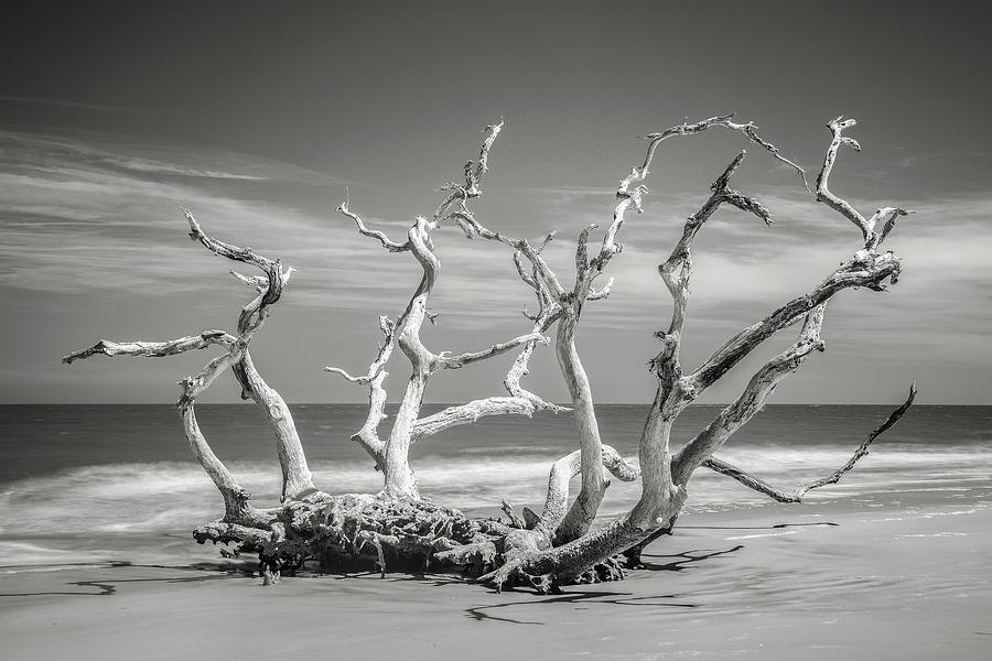 Jekyll Island Photograph - Crown From The Past by Jon Glaser