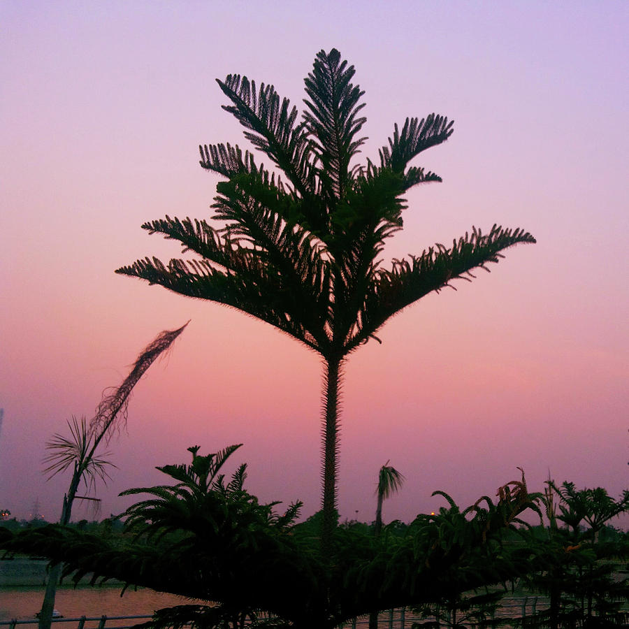 City Photograph - Crown In Pink Sky by Atullya N Srivastava