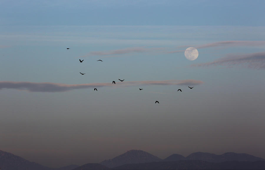 Crows Photograph - Crows Coming Home To Roost by Robin Street-Morris