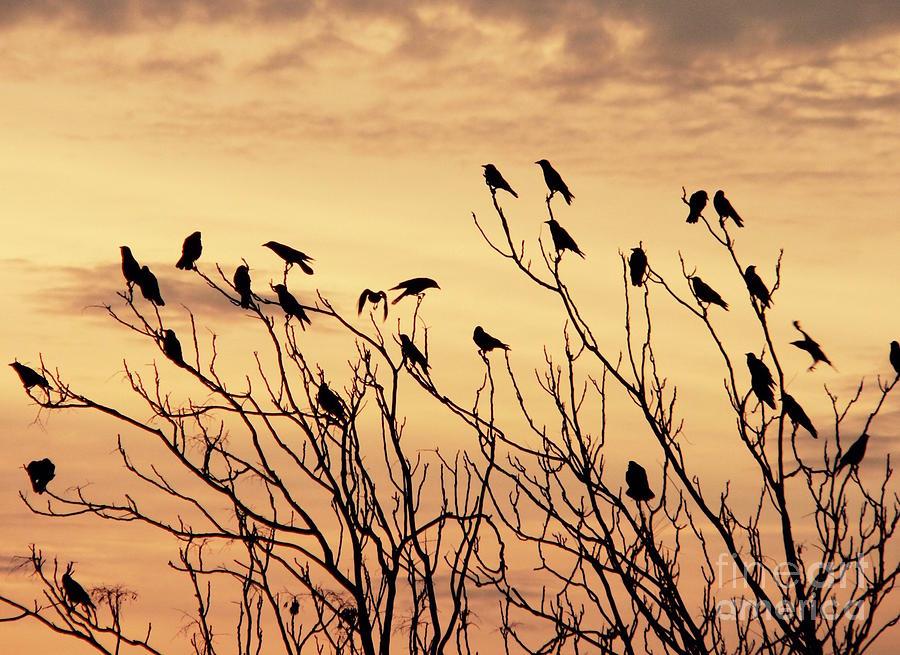 Crows in their Twitter Cloud. by Heinz G Mielke