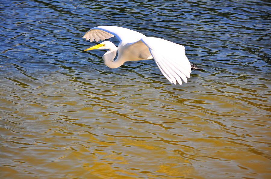Birds Photograph - Cruising2 by Len Barber